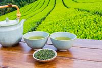 茶畑と日本茶