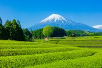 富士山と茶畑と青空