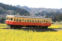 市原石神菜の花畑を走る小湊鉄道