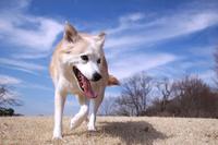 笑顔で歩く犬と青空