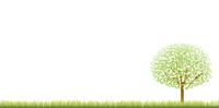 新緑 木 風景 背景