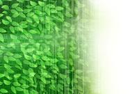 新緑 葉 和紙 背景
