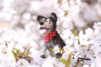 桜の花と羊毛フェルトの犬