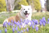笑顔で伏せる犬と花