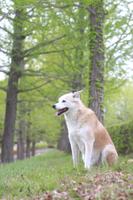 笑顔の犬と新緑