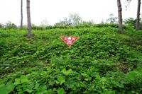 非武装地帯の地雷原マーク