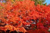 東山の紅葉