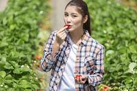 イチゴ狩りをする女性