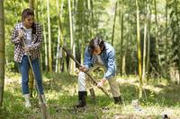 筍を掘るカップル