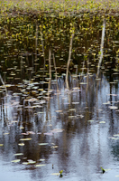 志賀高原・秋の琵琶池