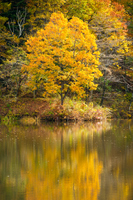 水面に映る黄葉