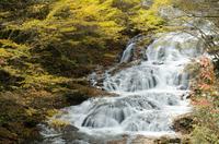 北軽井沢・魚止めの滝の黄葉