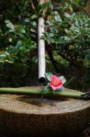 日本庭園の風情
