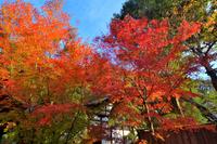 龍吟庵の紅葉