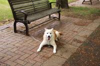 公園のベンチで伏せて待っている犬