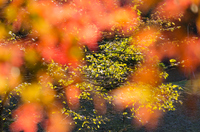 秋の色彩に満たされた空間