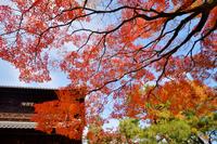 建仁寺の紅葉