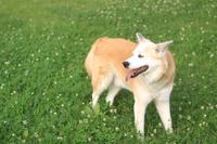草原の上に笑顔で佇む犬