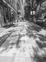 初夏の表参道