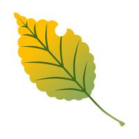 紅葉した葉 黄色