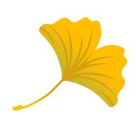 紅葉したイチョウの葉 黄色
