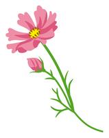 コスモス 切り花 フラット