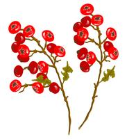 赤い木の実の枝