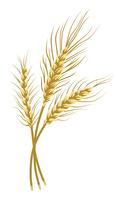 麦の穂 束