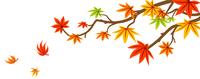 紅葉 カエデの枝と落ち葉