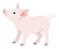 豚 見上げる