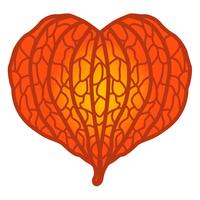 ホオヅキの実 オレンジ色
