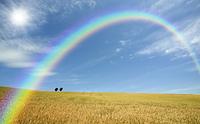 麦畑と木と雲と虹と太陽