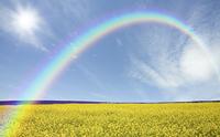 黄色い花咲く丘と雲と虹と太陽