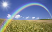 麦畑と雲と太陽と虹