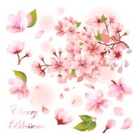 桜の素材セット