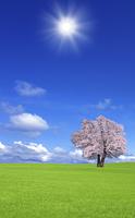 草原の桜の木と雲