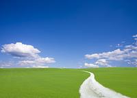 丘へ続く白い道