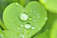 葉っぱについた水滴