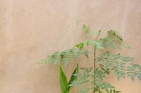 コンクリート壁面と観葉植物