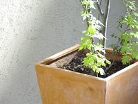 玄関先の観葉植物