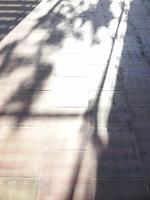 室内の床に入る木漏れ日