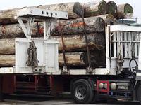 製材所に運ぶ原木