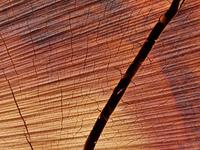 材木の断面