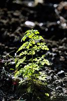 新芽の植物