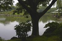 木陰から池を望む