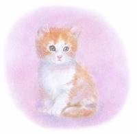アメリカンカールの子猫