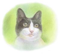 黒白の子猫