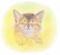 夢見る子猫
