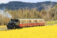 菜の花畑を走る小湊鉄道 トロッコ列車