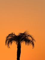 夕暮れ空とヤシの木